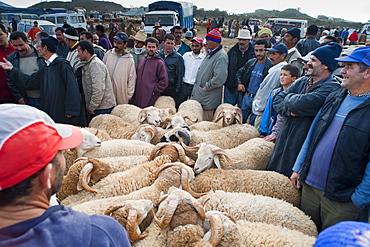 Ram auction, livestock market, Tetouan, Morocco, North Africa, Africa