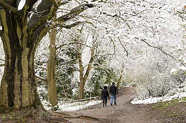 Hampstead Heath in the snow, London, England, United Kingdom, Europe