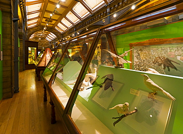 Birds Gallery, Natural History Museum, South Kensington, London, England, United Kingdom, Europe