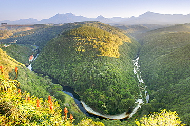 The Map of Africa land formation in the Kaaimans River near Wilderness along the Garden Route in Western Cape Province, South Africa, Africa