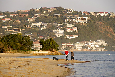 Couple walking their dog along the beach of Leisure Isle in Knysna Lagoon on the Garden Route, Western Cape, South Africa, Africa
