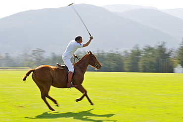 Practising polo on the Kurland estate in Plettenberg Bay on the Garden Route, Western Cape, South Africa, Africa
