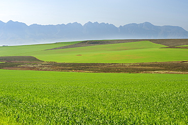 View of agricultural fields and the Langeberg mountain range from the N2 highway in Western Cape Province, South Africa, Africa