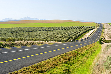 The N2 highway near Swellendam in Western Cape Province, South Africa, Africa
