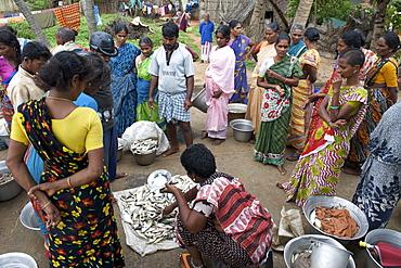 Fish auction at Kalapet village near Pondicherry India