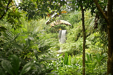 Interior of the Masoala rainforest project which forms part of the Zürich zoo in Switzerland.