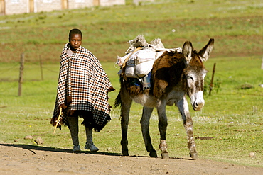 A Basotho child walking with a donkey in the village of Semonkong in Lesotho, Africa