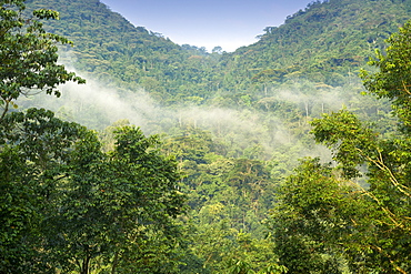 View of the rainforests of Bwindi Impenetrable National Park in southern Uganda.