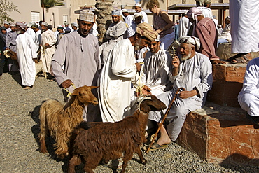 Goats being paraded for sale in the livetsock arena of the Friday market in Nizwa in Oman.
