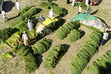 Fodder for sale in the outdoor souk in Nizwa in the Sultanate of Oman.