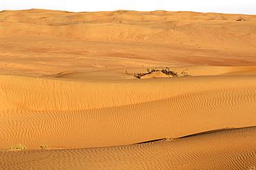 View across Wahiba Sands (Ramlat al Wahaybah) in Oman.