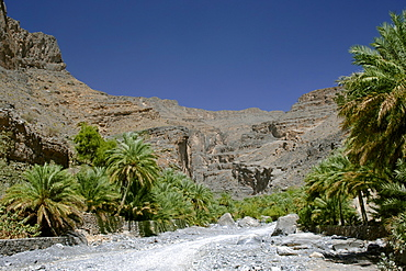 Date palms lining Wadi Nakhr in the Jebel Akhdar mountains of Oman.