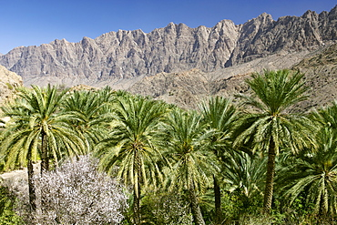 Landscape in the Ghubrah bowl region of the Jebel Akhdar mountain of Oman.