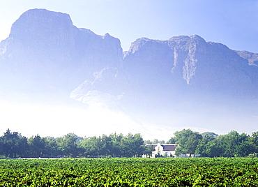 Boschendal Vineyards, Franschhoek region, Western Cape Province, South Africa, Africa