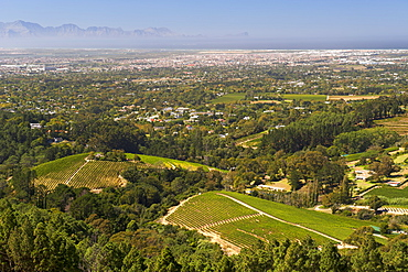 View of vineyards in the Constantia area of Cape Town's southern suburbs in South Africa.