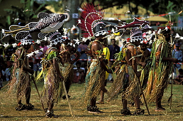 Dancers from GAUA in the Banks Islands perform at a cultural festival wearing fish headresses and rattling nuts on their ankles, Efate Island, Port Vila, Vanuatu