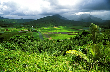 View from the popular Hanalei Valley Lookout of patchwork fields of Taro, the common staple of the Pacific. Kauai is known as the 'Garden Island', Kauai, Hawaii, USA
