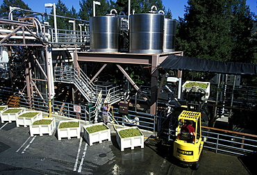 Grapes being processed at the Sterling Winery near Calistoga, perched on a rock outcrop over the Napa Valley north of San Francisco, famous for its 200 wineries, Napa Valley, Northern California, California, United States of America (USA), North America