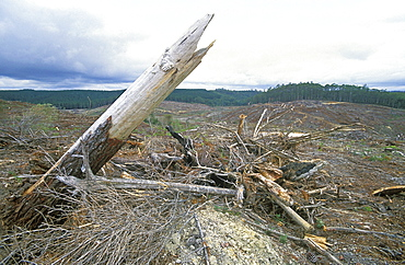 Forest stripped bare by logging north west of Cradle Mountain, deforestation is a big environmental and economic issue in this state, Murchison Highway, Tasmania, Australia, Pacific - 83-11959