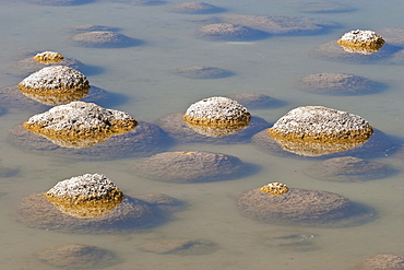 Thrombolites, a variey of microbialite or living rock that produce oxygen and deposit calcium carbonate, similar to some of the earliest fossil forms of life found on Earth, Lake Clifton, Yalgorup National Park, Mandurah, Western Australia, Australia, Pacific