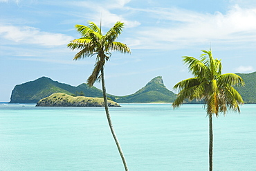 Endemic Kentia palms, also cultivated for worldwide sale, and lagoon with Mount Eliza beyond, on this 10km long volcanic island in the Tasman Sea, Lord Howe Island, UNESCO World Heritage Site, New South Wales, Australia, Pacific