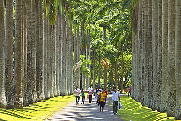 Cabbage Palm Avenue in the Royal Botanic Gardens, popular with families and young couples, Peradeniya, near Kandy, Sri Lanka, Asia