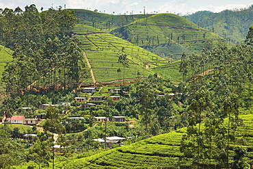 Village amidst tea plantations in the hill country between Hatton and Nuwara Eliya, Central Highlands, Sri Lanka, Asia