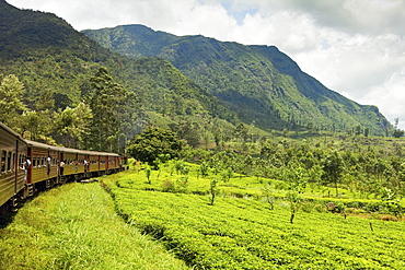 The scenic train ride through the Central Highlands, with its mountains and tea plantations, near Nuwara Eliya, Sri Lanka, Asia