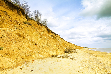 Severe erosion of loose Quaternary glacial sands on this coast that has retreated more than 500m since the1830s, Covehithe, Suffolk, England, United Kingdom, Europe