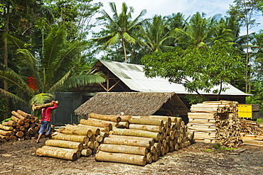Sawn tree trunks at lumber yard in this rural district near Pangandaran on the south coast, Cijulang, West Java, Java, Indonesia, Southeast Asia, Asia