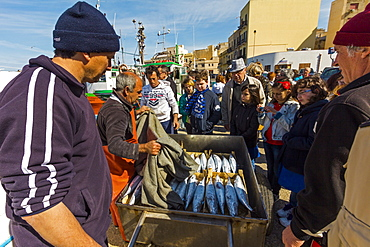 A catch of Bullet Tuna (Bullet Mackerel) attracts interest in this busy north western fishing port, Trapani, Sicily, Italy, Europe