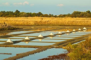 Salt pans and piles of Fleur de Sel around the Fier d'Ars marshes of the west, Ars en Re, Ile de Re, Charente-Maritime, France, Europe