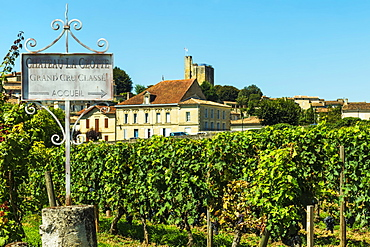 Grand Cru vineyard of Chateau La Clotte in this historic town and famous Bordeaux red wine region, Saint Emilion, Gironde, France, Europe