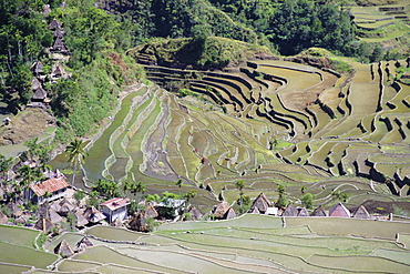 Spectacular amphitheatre of rice terraces around the mountain province village of Batad, northern area of the island of Luzon, Philippines, Southeast Asia, Asia