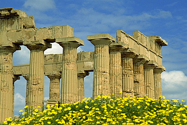 Temple amongst the spring flowers, Selinunte, established 5th century BC, Sicily, Italy, Europe