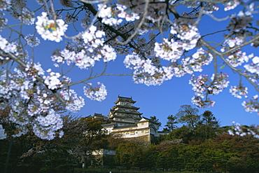 Spring blossom and Himeji Castle (Himeji-jo), built in 1580, UNESCO World Heritage Site, Himeji, west Honshu, Japan, Asia - 83-5411