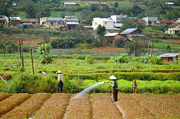 Irrigating fields near Dalat, city in Central Highlands, Vietnam, Indochina, Southeast Asia, Asia