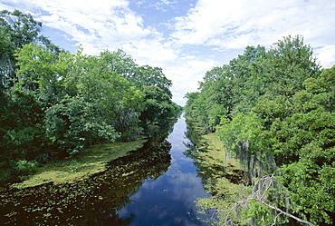 Bayou in swampland at Jean Lafitte National Historic Park and Preserve, south of New Orleans, Louisiana, United States of America (U.S.A.), North America