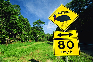 Warning road sign for cassowaries near Mission Beach on the northeast coast of Queensland, Australia, Pacific