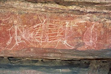 Warrior frieze at the Aboriginal rock art site at Ubirr Rock, Kakadu National Park, where paintings date from 20000 years old to present day, UNESCO World Heritage Site, Northern Territory, Australia, Pacific