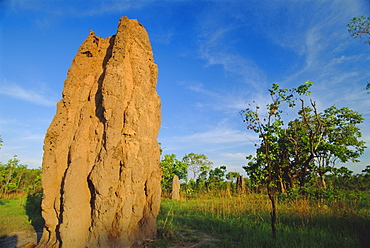 Termite 'cathedral' by the Arnhem Highway near the Mary River Crossing between Darwin and Kakadu at 'The Top End', Northern Territory, Australia