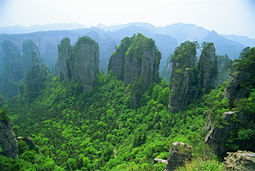 Spectacular limestone outcrops and forested valleys of Zhangjiajie Forest Park in Wulingyuan Scenic Area in Hunan Province, UNESCO World Heritage Site, China, Asia