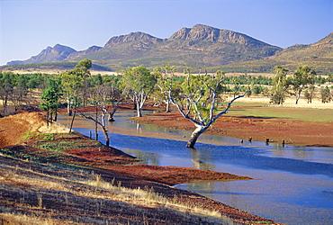 Gum trees in a billabong, Flinders Range National Park, South Australia, Australia