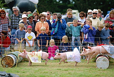 Crowds watching pigs racing at the Mayfield county show on the Canterbury Plains, South Island, New Zealand, Pacific