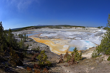 Porcelain Springs, Porcelain Basin, Norris Geyser Basin, Yellowstone National Park, UNESCO World Heritage Site, Wyoming, United States of America, North America