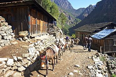 Mule train between Phakding and Namche, Everest Base Camp Trek, Solukhumbu, Nepal, Himalayas, Asia
