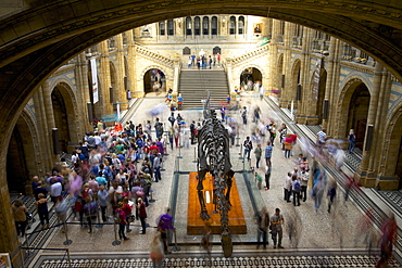 Central Hall, Natural History Museum, South Kensington, London, England, United Kingdom, Europe