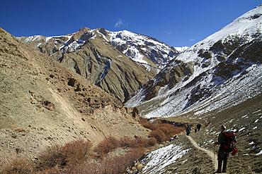 Tourists trek in winter, Hemis National Park, Ladakh, India, Asia