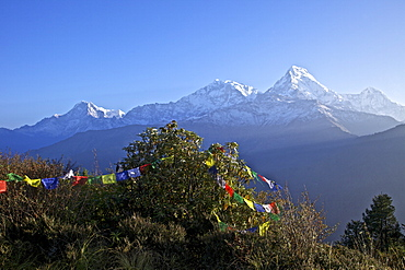 View of Annapurna I and Annapurna South from Poon Hill at dawn, with Buddhist prayer flags, Annapurna Sanctuary Region, Himalayas, Nepal, Asia