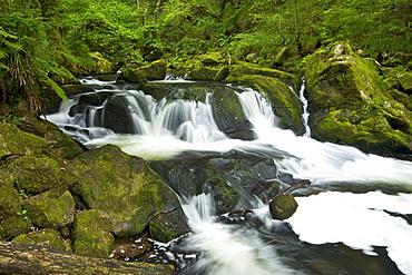 River Fowey at Golitha Falls National Nature Reserve, sessile oak woodland, Bodmin Moor, Cornwall, England, United Kingdom, Europe